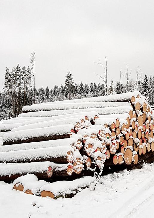 talvinen-tukkipino